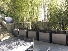 bamboo & concrete planter - Google Search Bamboo In Pots, Bamboo Planter, Metal Planter Boxes, Corten Steel Planters, Bamboo Garden, Concrete Planters, Potted Bamboo, Planter Ideas, Green Garden