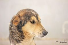 shelter  save a life  egypt  pets in frames photography  #facebookpage