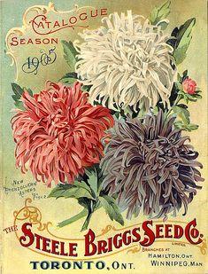 The Steele Briggs Seed Co. Limited  Catalogue: season 1905  Catalogue