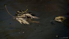 https://flic.kr/p/AdLZxn | Herbst • Blätter im Sternenstaub, Autumn • leaves in Stardust