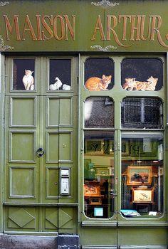 Maison Arthur et chats en trompe-l'oeil