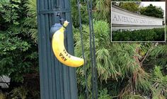 Bananas hung by nooses found on American University campus