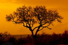 12 Day South Africa – Explore Cape Town, Garden Route & Kruger National Park, this vacation package is filled with amazing excursions and safari. African Sunset, Twilight Photos, Kruger National Park, Vacation Packages, Cape Town, South Africa, Safari, Royalty Free Stock Photos, Explore
