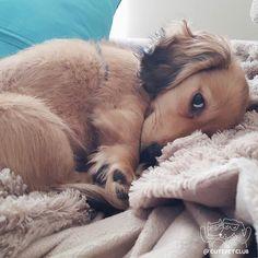 Nap Time. #CuteAnimals #CuteBabyAnimals #Animals