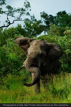 Photo by Rico Demetriou at Sabi Sabi Private Game Reserve, South Africa
