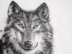 Ik heb dit filmpje van een wolf nagetekend. Het duurde wel lang.