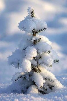 Fresh snow on trees is so pretty Winter Szenen, Winter Magic, Winter Photography, Nature Photography, Snow Pictures, Snow Scenes, Winter Pictures, Winter Landscape, Winter Garden