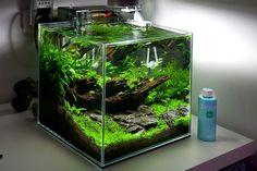 akwarium 30x30x30 - Szukaj w Google