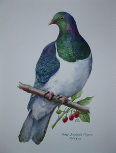 Jane Sinclair - Fine Art Painting, specialising in New Zealand Landscapes and Birds. Jane also offers Art Tuition through workshops or weekly classes. Bird Painting Acrylic, Watercolor Bird, Watercolor Tattoos, Rock Painting, Watercolour Painting, New Zealand Tattoo, New Zealand Art, Exotic Birds, Colorful Birds