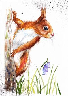 Original Watercolour Painting by Be Coventry,Animals,Realism,Red Squirrel no.2