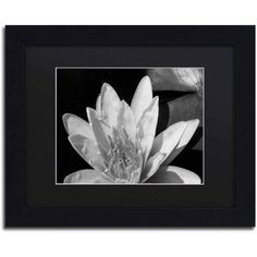 Trademark Fine Art Water Lily in Black and White Canvas Art by Kurt Shaffer, Black Matte, Black Frame, Size: 11 x 14, White