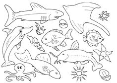 fish template   Pictures to Colour - Fish