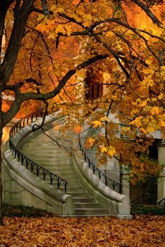 Stair surrounded by autumn leaves