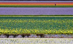 Dutch Flower Fields | 28 Incredibly Beautiful Places You Won't Believe Actually Exist