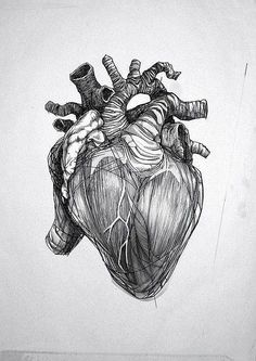 Anatomic Heart Tattoo Design