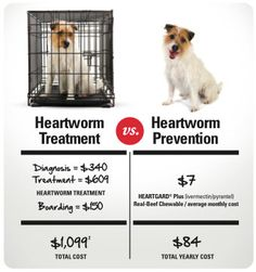 Heartworm Myth: Treatment for heartworm disease is just as easy as preventing it.