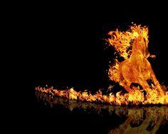Fire Horse Wallpaper