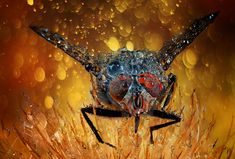 """""""The fly"""" by Krasi St M -  #fstoppers #Nature #macro #MacroInsect #dewdrop #closeup #fly"""