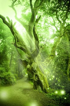 Fantasy Green Forest Backdrop Fairy Tale by BackdropDesign