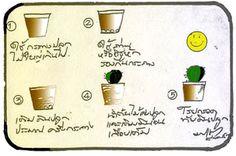 การดูแล กระบองเพชร: เลี้ยงแคคตัสอย่างไรให้สวยงาม