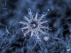 Snowflake (explore) | Flickr - Photo Sharing!