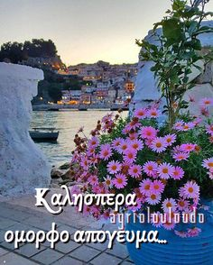 Good Afternoon, Good Morning, Night Pictures, Movies, Movie Posters, Flowers, Buen Dia, Bonjour, Films