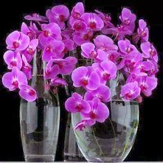 Galeria de Flores - 15 arranjos