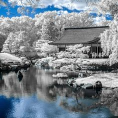 I think one of my favorite things is try something new with photography. Here is the Shofuse Japanese House in Fairmont park in infrared. I converted my old t3i to only shoot higher wave lengths of light including infrared which a normal camera cannot pick up. The results are so much different than anything you would expect. Idk why I don't see more from here because its such a different place for the city. @jj.bowen sharing photos this weekend. #phillygram #phillyunknown #igers_Philly
