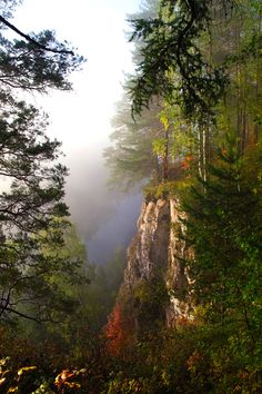 Get lost in Siberian forest, be amazed by Siberian nature!   - Explore the World with Travel Nerd Nici, one Country at a Time. http://www.TravelNerdNici.com