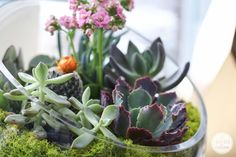 Succulent Garden Bowl | Inspired by Charm
