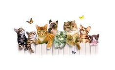 The Girls Club Kitten Cat Graphic on Womens by firelandsteeshirts Cat Wallpaper, Animal Wallpaper, Kittens Cutest, Cats And Kittens, Kitty Cats, I Love Cats, Cute Cats, Lovable Images, Timeline Covers
