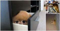 30 Dogs That Ruled The Game Of Hide And Seek