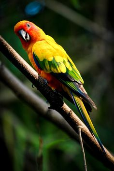 Beautiful Birds and Animals Pictures