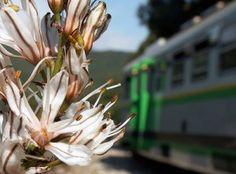 Il #Trenino Verde, dall'800, continua a percorrere l'isola in lungo e in largo per 600 km e a far visitare la #Sardegna e le sue bellezze naturali a sbalorditi turisti provenienti da ogni parte del mondo.