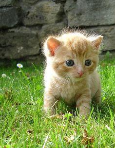 adorable!!!!!!!!!!!!!!!!!!!!!!!!!!!!!!!!!!!!!!!!!!!!!!!!!!!!!!!!!
