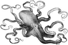 "Hey, I recognize that octopus illustration! It's an illustration of the ""eight armed cuttle"" from the Crystal Palace exhibition of 1871. It's used on a new article on &#8220…"