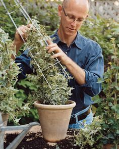 make a topiary