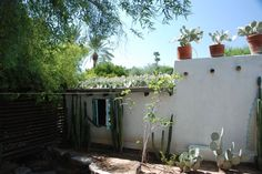 Steve Martino landscape designer - green roof