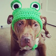Frog Hat. #pitbull #dogparkpublishing http://www.dogparkpublishing.com/product_info.php/green-frog-hat-p-936
