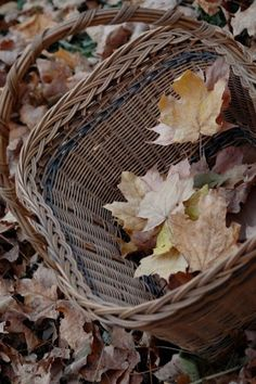 "seasonalwonderment: "" Autumn ""                                                                                                                                                                                 More"