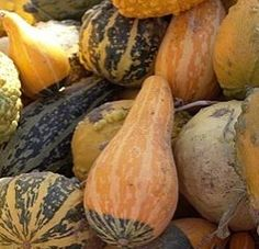 How to Dry Gourds