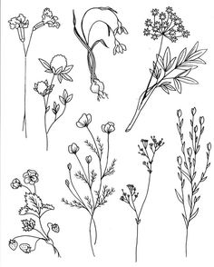 Delicate leaves and plant doodles for your bullet journal, planner and sketchbook. Hand drawing ideas.