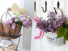flieder-arten duftende-frühjahr blüher-dezent-lila