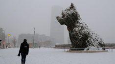 La bucólica estampa que deja la nieve en toda España