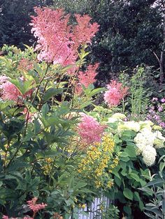 Meadowsweet : Meadowsweet looks like a supersized astilbe with its cotton-candy blooms of fluffy pink borne on 5-foot-tall stems. The plant is also known as queen-of-the-prairie, a fitting name for this Midwest native. It grows best in full sun, but it tolerates some shade.