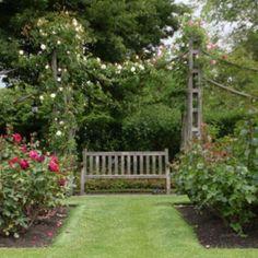 Rose garden, Regent's Park, London