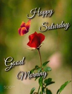 Saturday Morning, Happy Saturday, Sunday, Good Morning Images Flowers, Days Of Week, Morning Quotes, David, Painting, Domingo