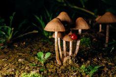 Lady on mushroom - null