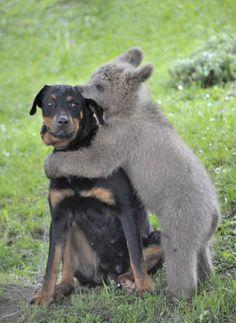 """now that's a """"bear"""" hug"""