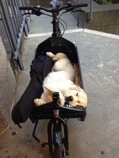 Bildergebnis für bullitt bike dog